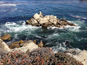 We visited Point Lobos State Reserve near Carmel. I showed my greenness by 1) Asking beforehand if I should bring my bathing suit, because the ocean is right there! 2) Not taking enough photos, because I didn't realize that in the vicinity, as far as breathtaking ocean cliffscapes are concerned, it's all downhill from Point Lobos.