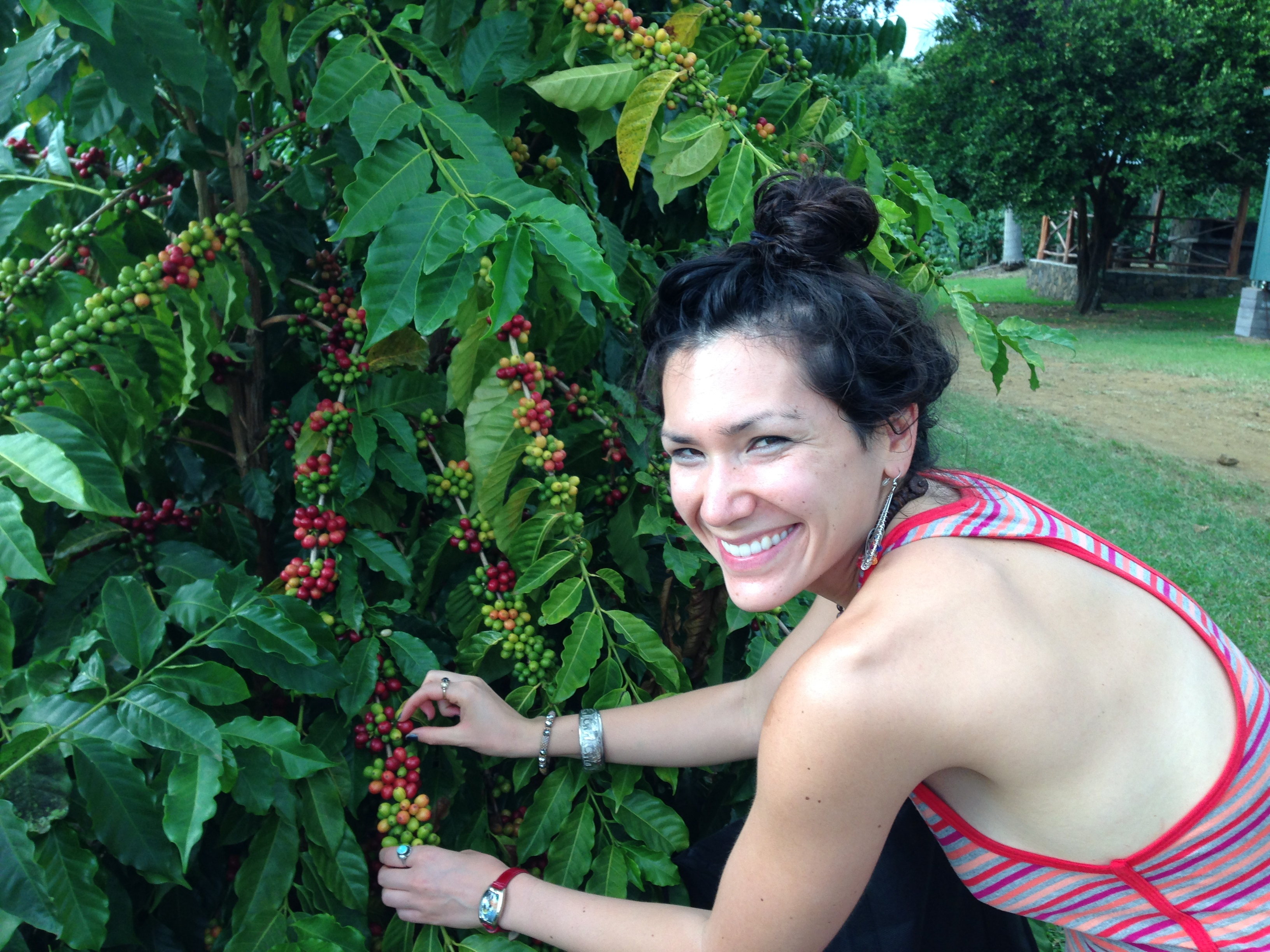 We attempted to make a few $$$ by picking some Kona coffee cherries during the trip.