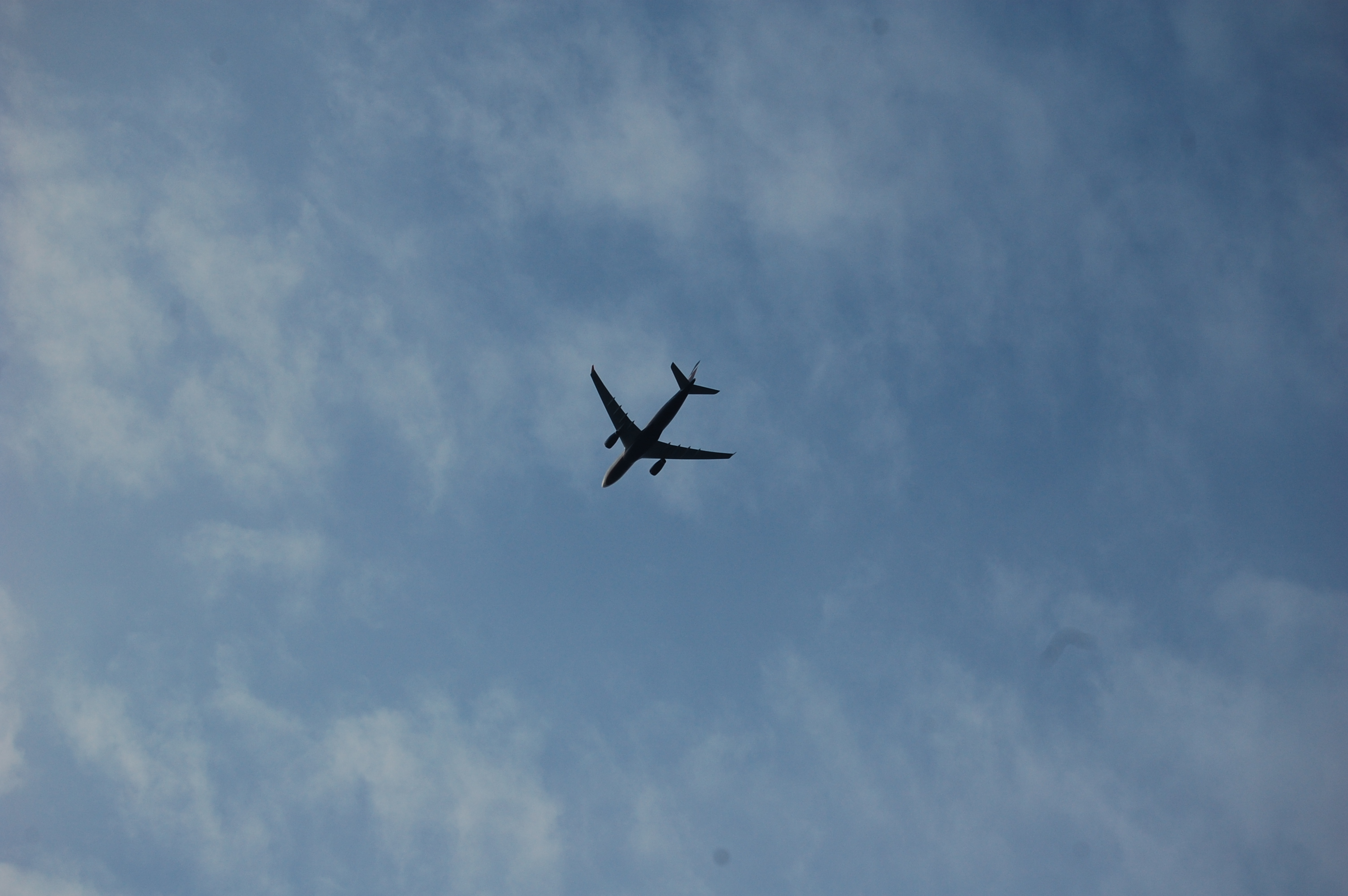Due to the marina's proximity to LAX, you're also likely to see planes.