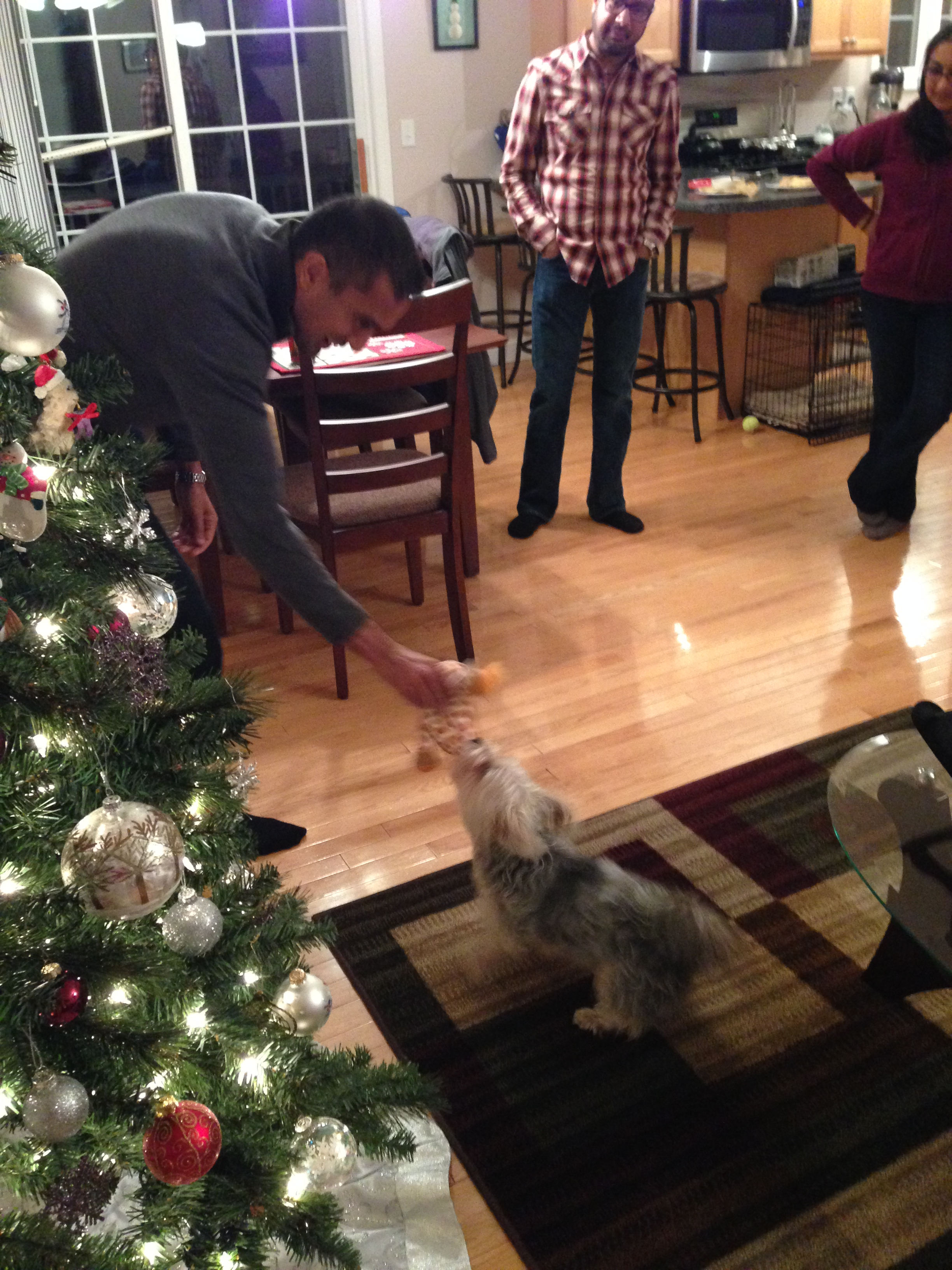 Xmas with dogs: This image from our New England visits to warm homes and warmer hosts.
