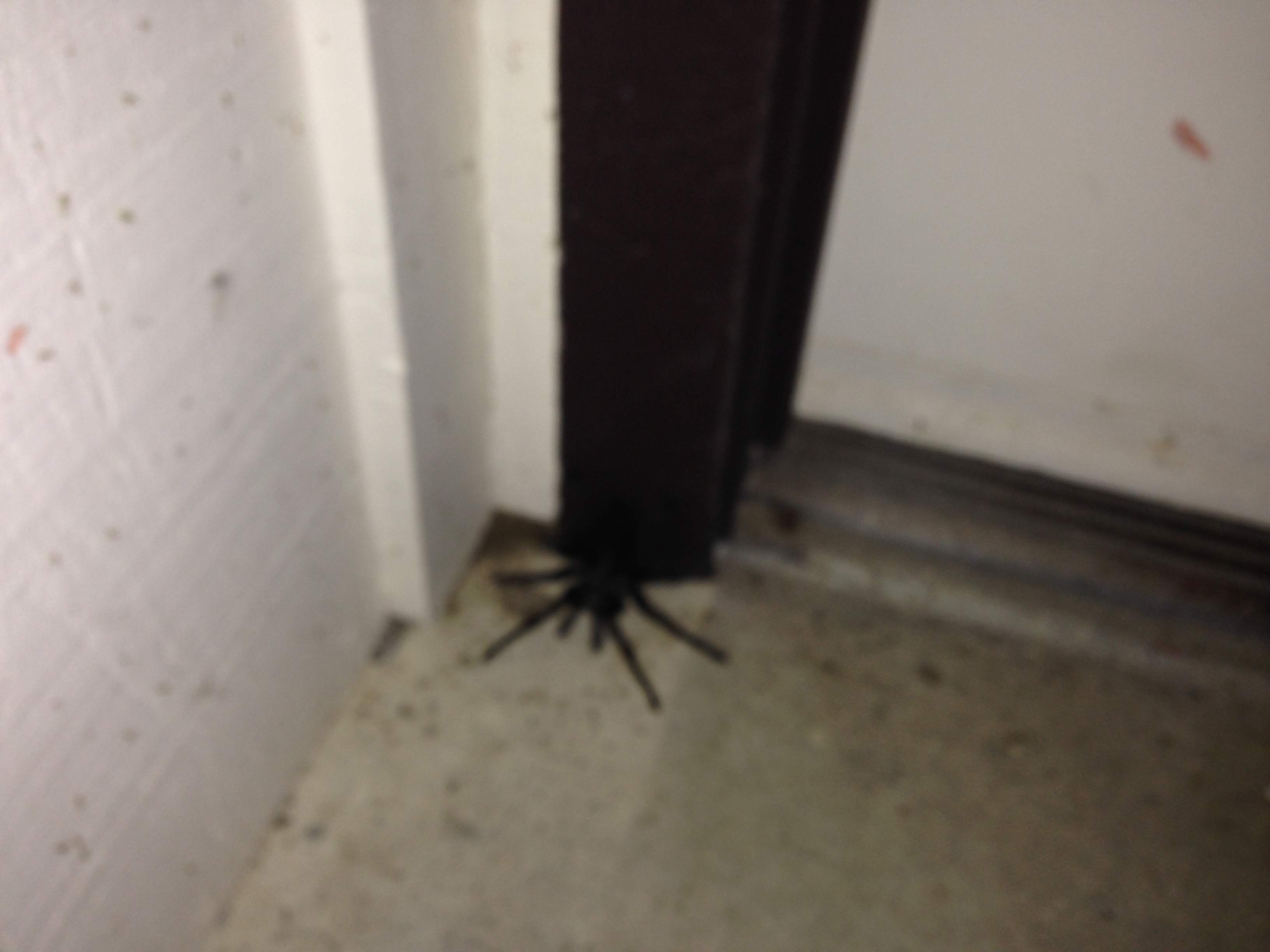 Ranch life - or should I say tarantula life? Popular lore has it that after a to-be-unnamed member of our party consumed a bit too much of the aforesaid Macallan, and then vomited, this arachnid emerged from the woods to feast on the puke. Circle of life?