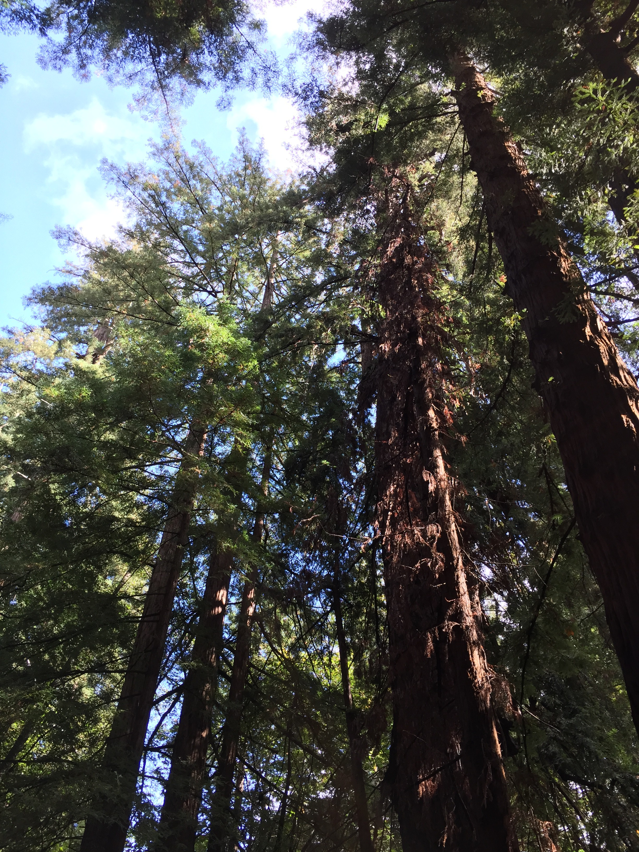 """""""From the Redwood forest, to the Gulf stream waters ..."""""""